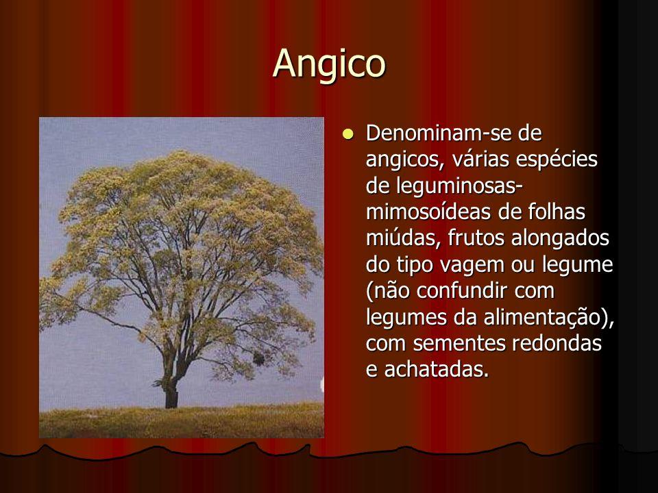 Angico Denominam-se de angicos, várias espécies de leguminosas- mimosoídeas de folhas miúdas, frutos alongados do tipo vagem ou legume (não confundir