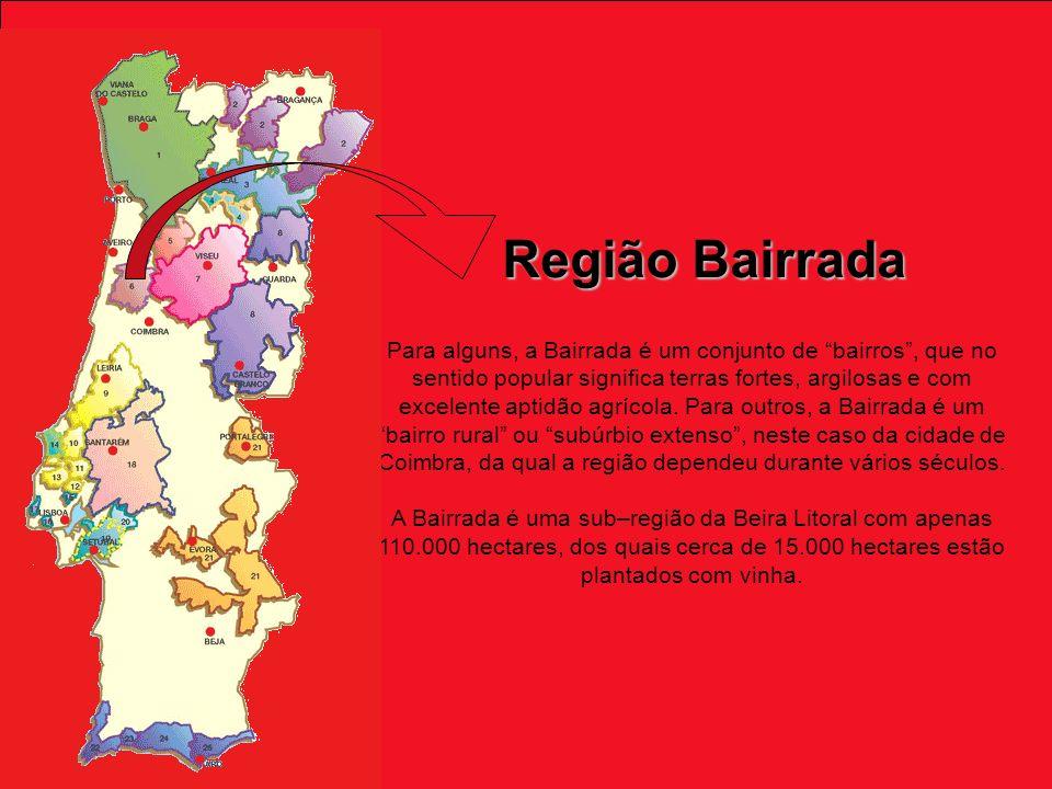 Região Bairrada Para alguns, a Bairrada é um conjunto de bairros, que no sentido popular significa terras fortes, argilosas e com excelente aptidão agrícola.