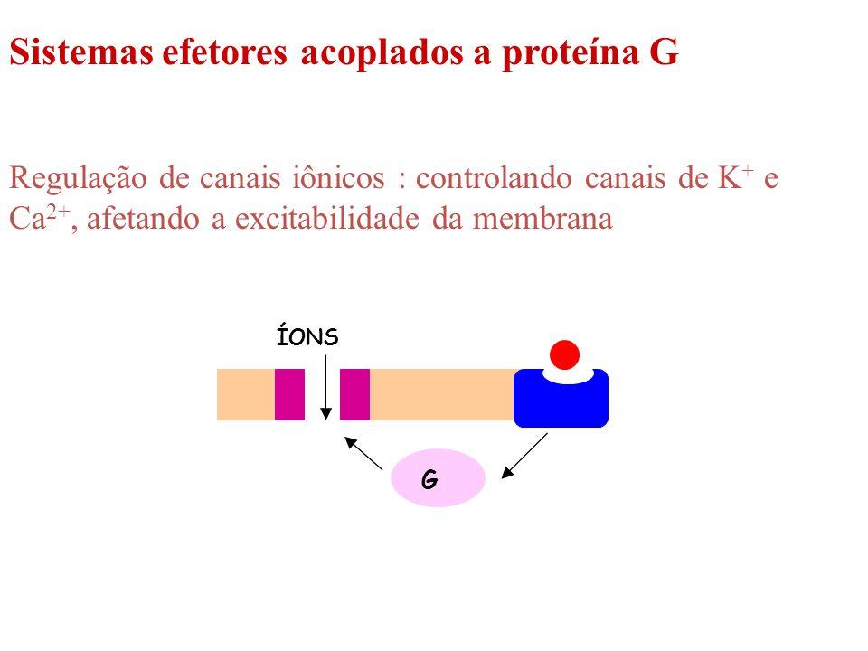 ÍONS G Sistemas efetores acoplados a proteína G Regulação de canais iônicos : controlando canais de K + e Ca 2+, afetando a excitabilidade da membrana