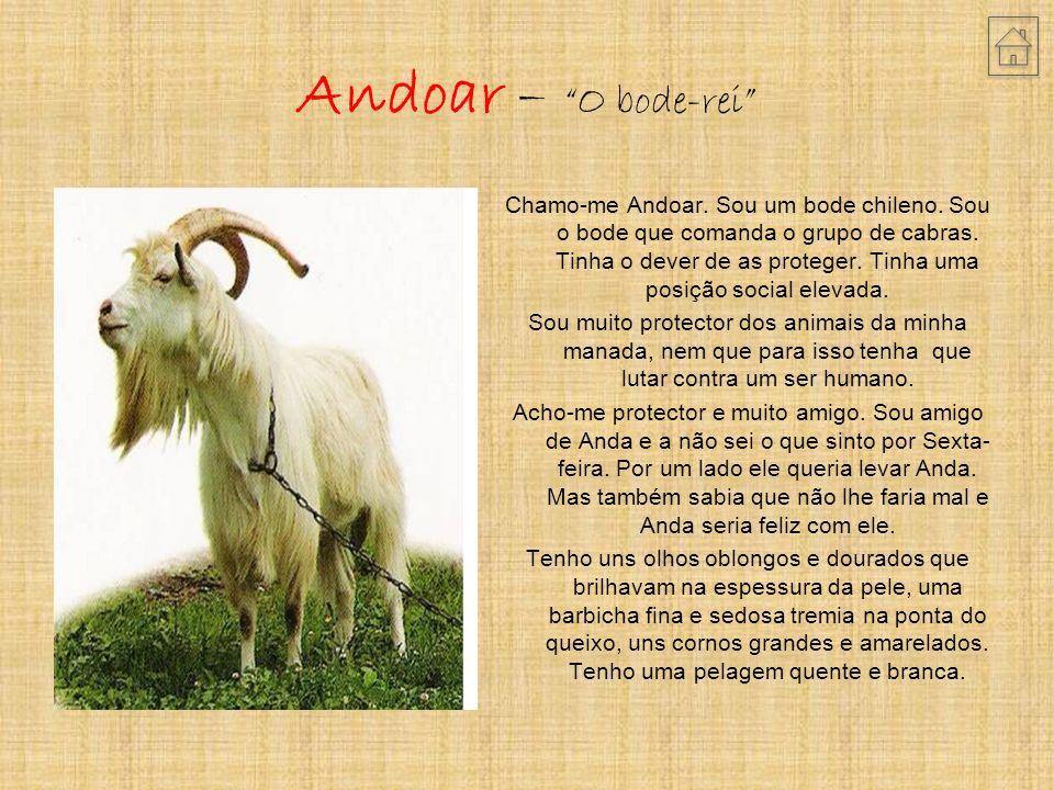 Andoar – O bode-rei Chamo-me Andoar.Sou um bode chileno.