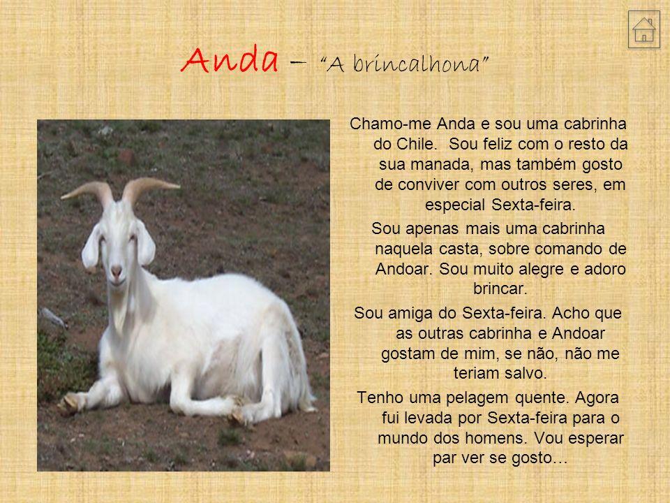 Anda – A brincalhona Chamo-me Anda e sou uma cabrinha do Chile.