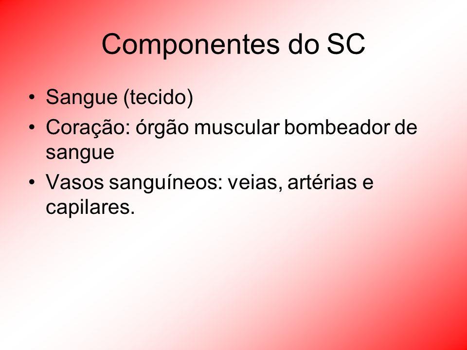 Componentes do SC Sangue (tecido) Coração: órgão muscular bombeador de sangue Vasos sanguíneos: veias, artérias e capilares.