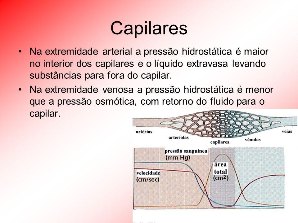 Capilares Na extremidade arterial a pressão hidrostática é maior no interior dos capilares e o líquido extravasa levando substâncias para fora do capi