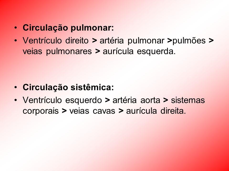 Circulação pulmonar: Ventrículo direito > artéria pulmonar >pulmões > veias pulmonares > aurícula esquerda. Circulação sistêmica: Ventrículo esquerdo