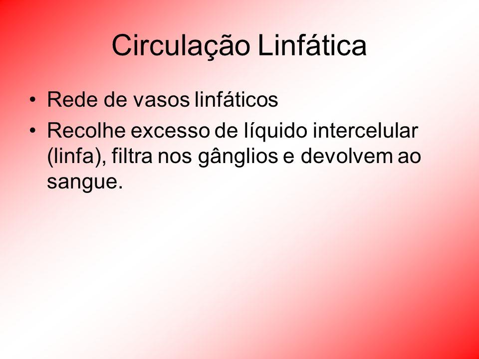 Circulação Linfática Rede de vasos linfáticos Recolhe excesso de líquido intercelular (linfa), filtra nos gânglios e devolvem ao sangue.