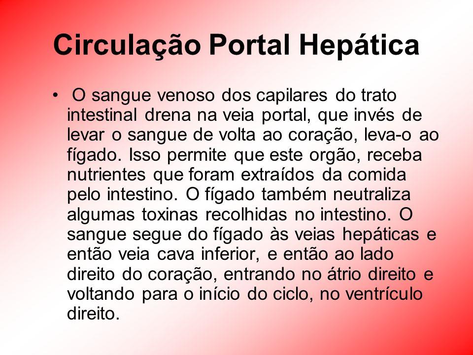 Circulação Portal Hepática O sangue venoso dos capilares do trato intestinal drena na veia portal, que invés de levar o sangue de volta ao coração, le