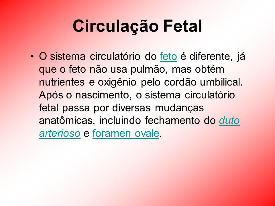 Circulação Fetal O sistema circulatório do feto é diferente, já que o feto não usa pulmão, mas obtém nutrientes e oxigênio pelo cordão umbilical. Após