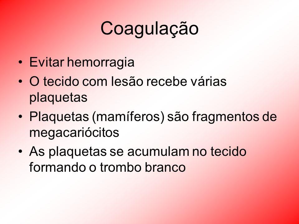 Coagulação Evitar hemorragia O tecido com lesão recebe várias plaquetas Plaquetas (mamíferos) são fragmentos de megacariócitos As plaquetas se acumula