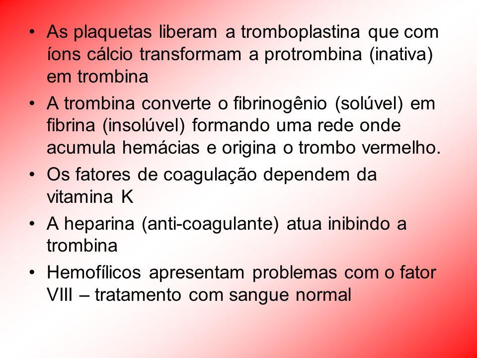 As plaquetas liberam a tromboplastina que com íons cálcio transformam a protrombina (inativa) em trombina A trombina converte o fibrinogênio (solúvel)