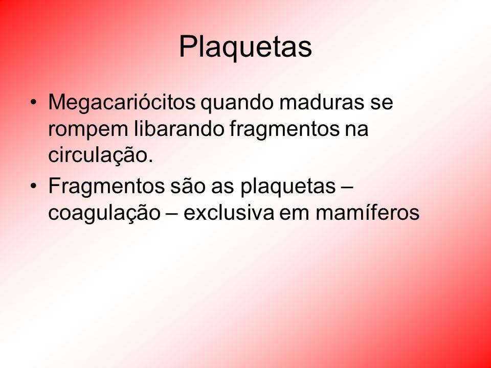 Plaquetas Megacariócitos quando maduras se rompem libarando fragmentos na circulação. Fragmentos são as plaquetas – coagulação – exclusiva em mamífero