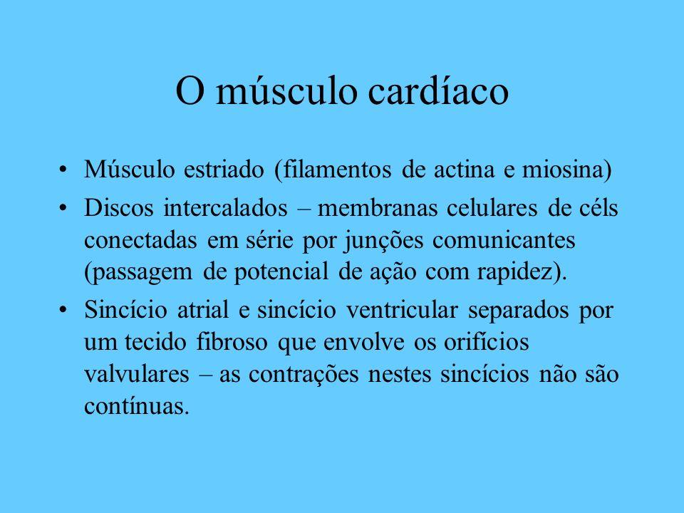 O músculo cardíaco Músculo estriado (filamentos de actina e miosina) Discos intercalados – membranas celulares de céls conectadas em série por junções
