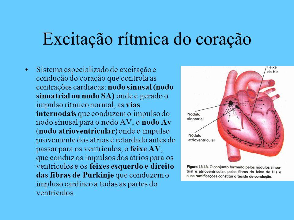 Excitação rítmica do coração Sistema especializado de excitação e condução do coração que controla as contrações cardíacas: nodo sinusal (nodo sinoatr