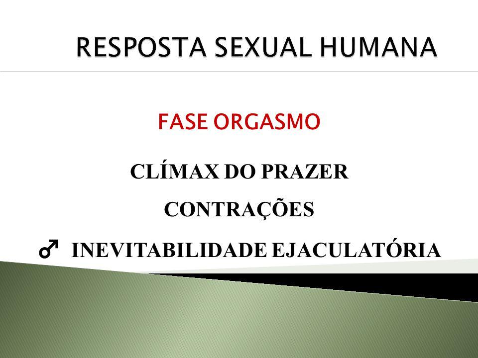 FASE ORGASMO CLÍMAX DO PRAZER CONTRAÇÕES INEVITABILIDADE EJACULATÓRIA