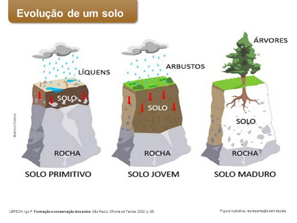 Perfil do solo Figura ilustrativa, representação sem escala LEPSCH, Igo F. Formação e conservação dos solos. São Paulo: Oficina de Textos, 2002. p. 65