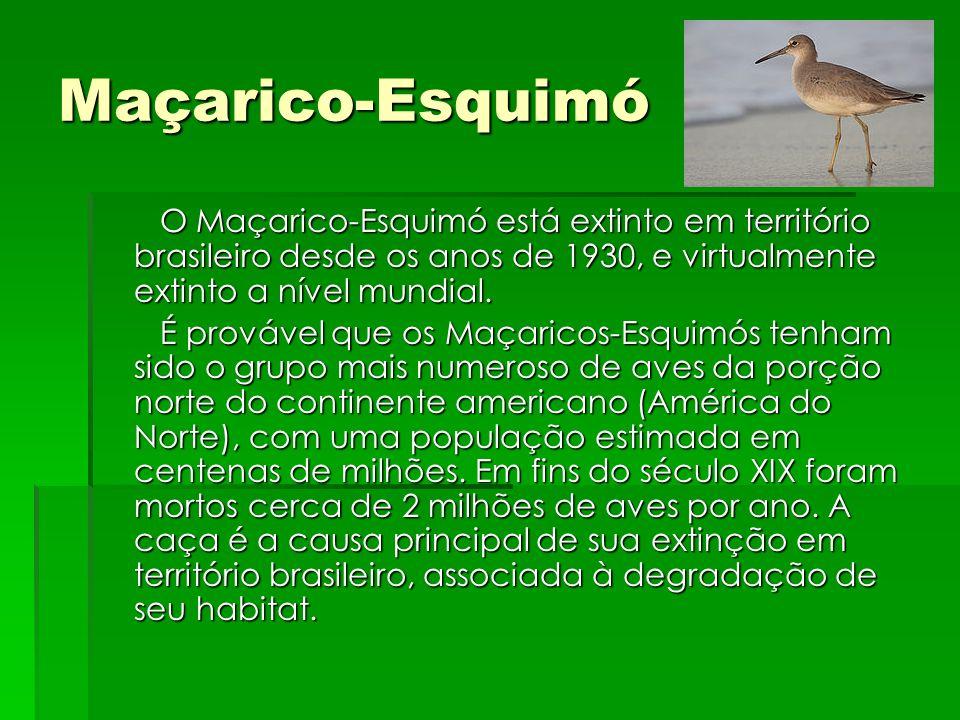Maçarico-Esquimó O Maçarico-Esquimó está extinto em território brasileiro desde os anos de 1930, e virtualmente extinto a nível mundial. O Maçarico-Es