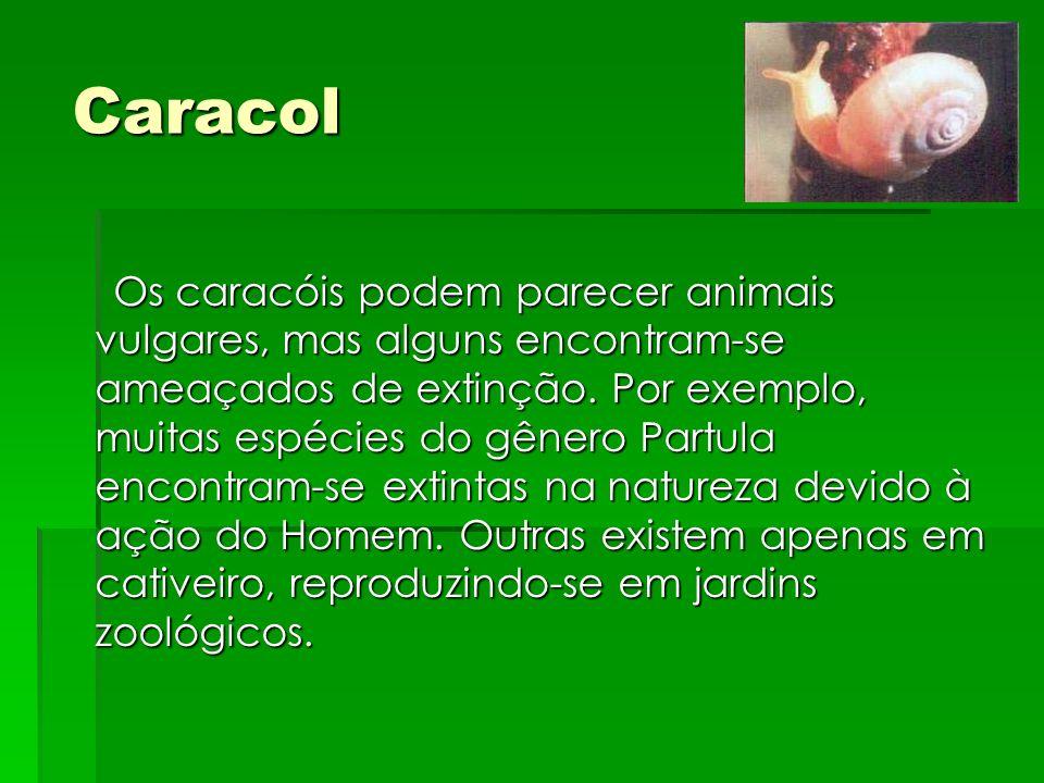 Caracol Os caracóis podem parecer animais vulgares, mas alguns encontram-se ameaçados de extinção. Por exemplo, muitas espécies do gênero Partula enco