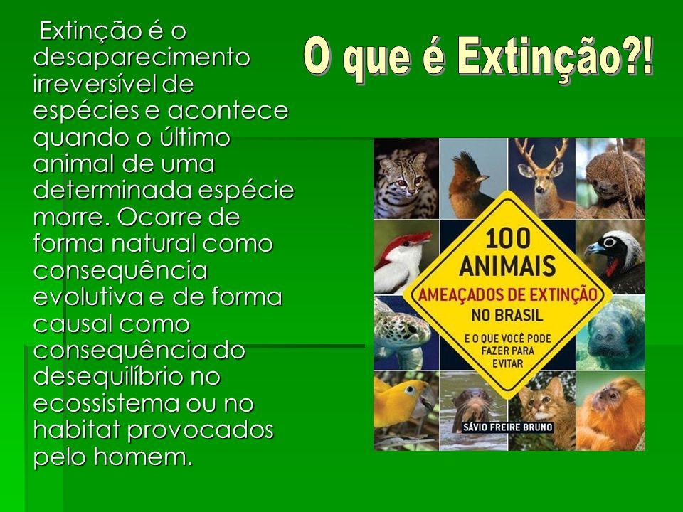 Extinção é o desaparecimento irreversível de espécies e acontece quando o último animal de uma determinada espécie morre. Ocorre de forma natural como