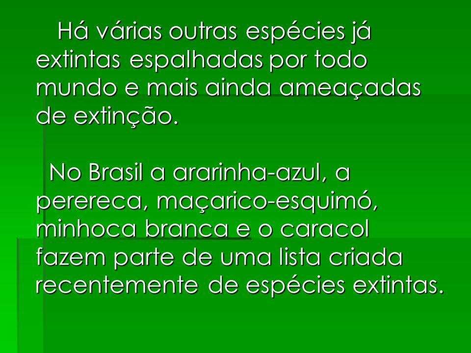 Há várias outras espécies já extintas espalhadas por todo mundo e mais ainda ameaçadas de extinção. No Brasil a ararinha-azul, a perereca, maçarico-es