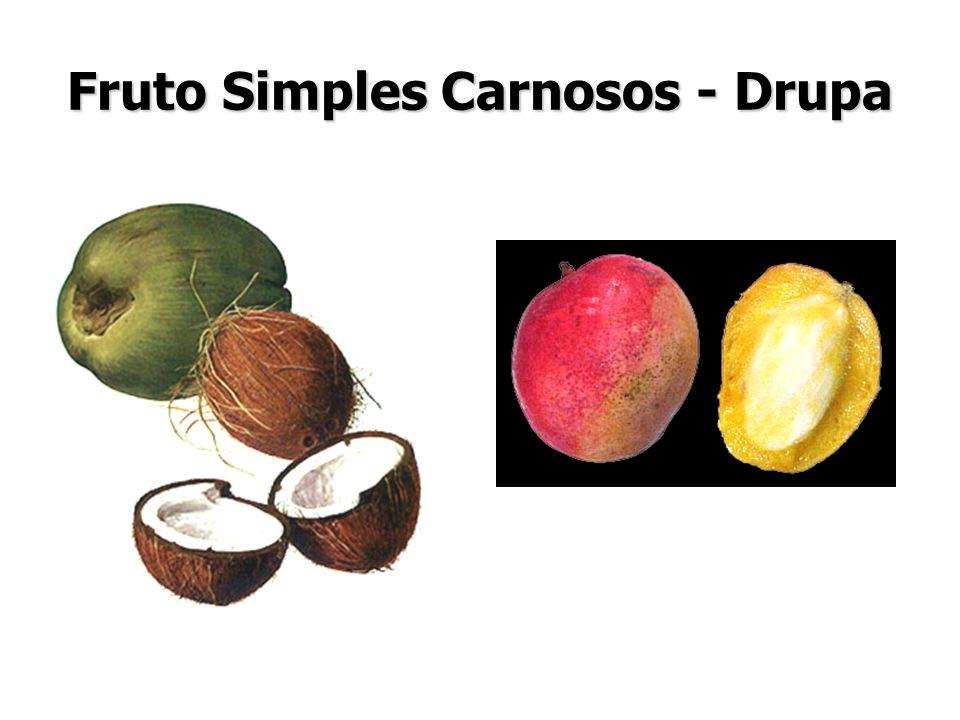 Fruto Simples Carnosos - Drupa