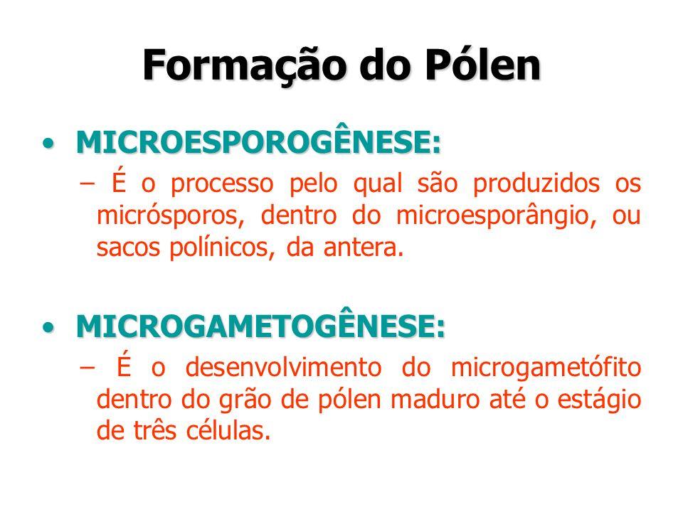 Formação do Pólen MICROESPOROGÊNESE: MICROESPOROGÊNESE: – É o processo pelo qual são produzidos os micrósporos, dentro do microesporângio, ou sacos po