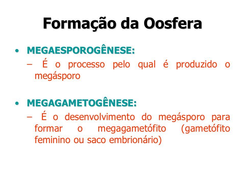 Formação da Oosfera MEGAESPOROGÊNESE: MEGAESPOROGÊNESE: – É o processo pelo qual é produzido o megásporo MEGAGAMETOGÊNESE: MEGAGAMETOGÊNESE: – É o des