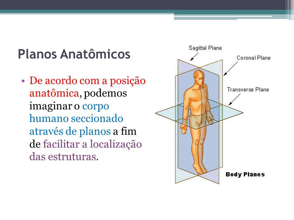 Planos Anatômicos De acordo com a posição anatômica, podemos imaginar o corpo humano seccionado através de planos a fim de facilitar a localização das