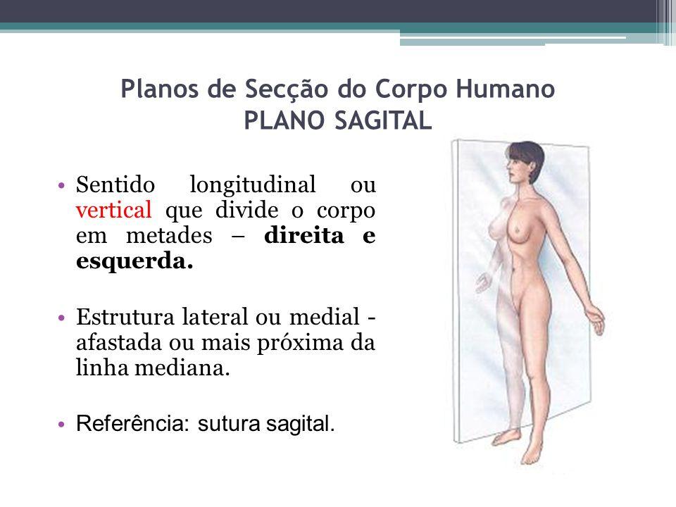 Planos de Secção do Corpo Humano PLANO SAGITAL Sentido longitudinal ou vertical que divide o corpo em metades – direita e esquerda. Estrutura lateral