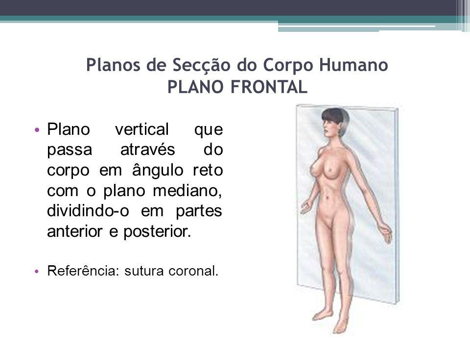 Planos de Secção do Corpo Humano PLANO FRONTAL Plano vertical que passa através do corpo em ângulo reto com o plano mediano, dividindo-o em partes ant