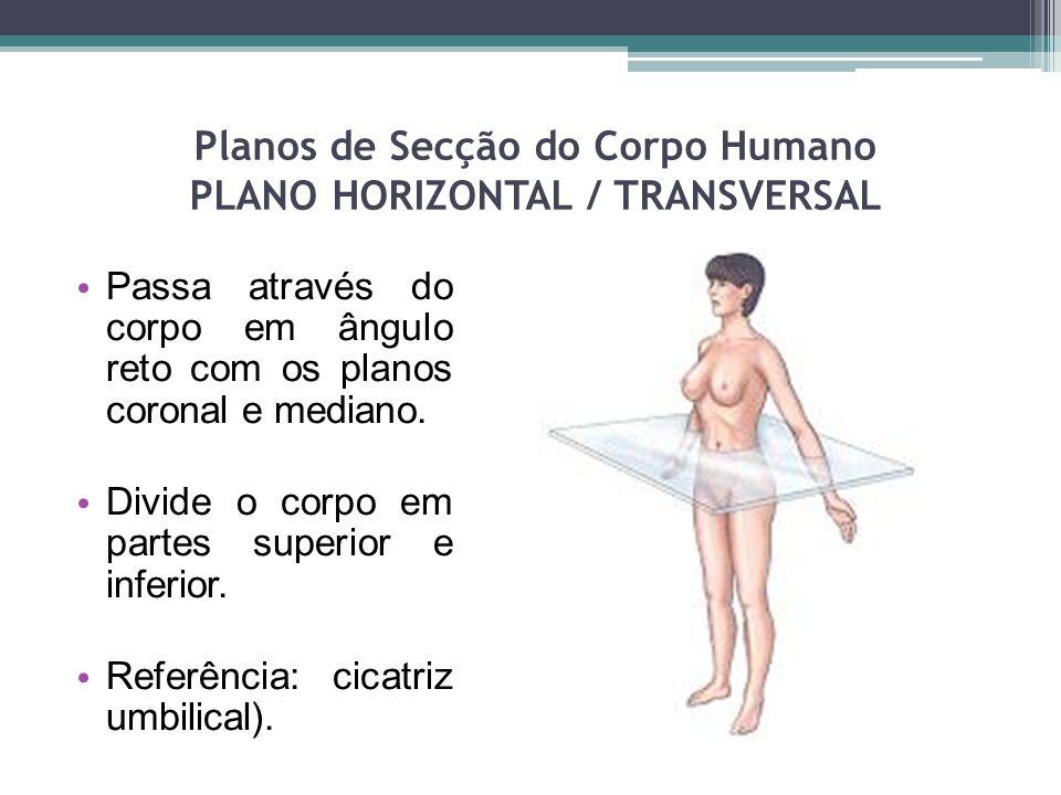 Planos de Secção do Corpo Humano PLANO HORIZONTAL / TRANSVERSAL Passa através do corpo em ângulo reto com os planos coronal e mediano. Divide o corpo