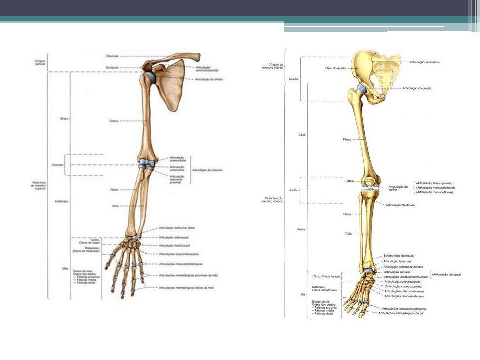 Anterior (VENTRAL) indica a parte de frente do corpo.