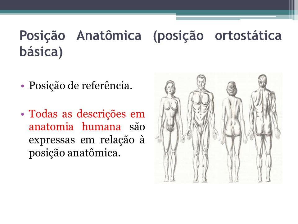 Posição Anatômica (posição ortostática básica) Posição de referência. Todas as descrições em anatomia humana são expressas em relação à posição anatôm