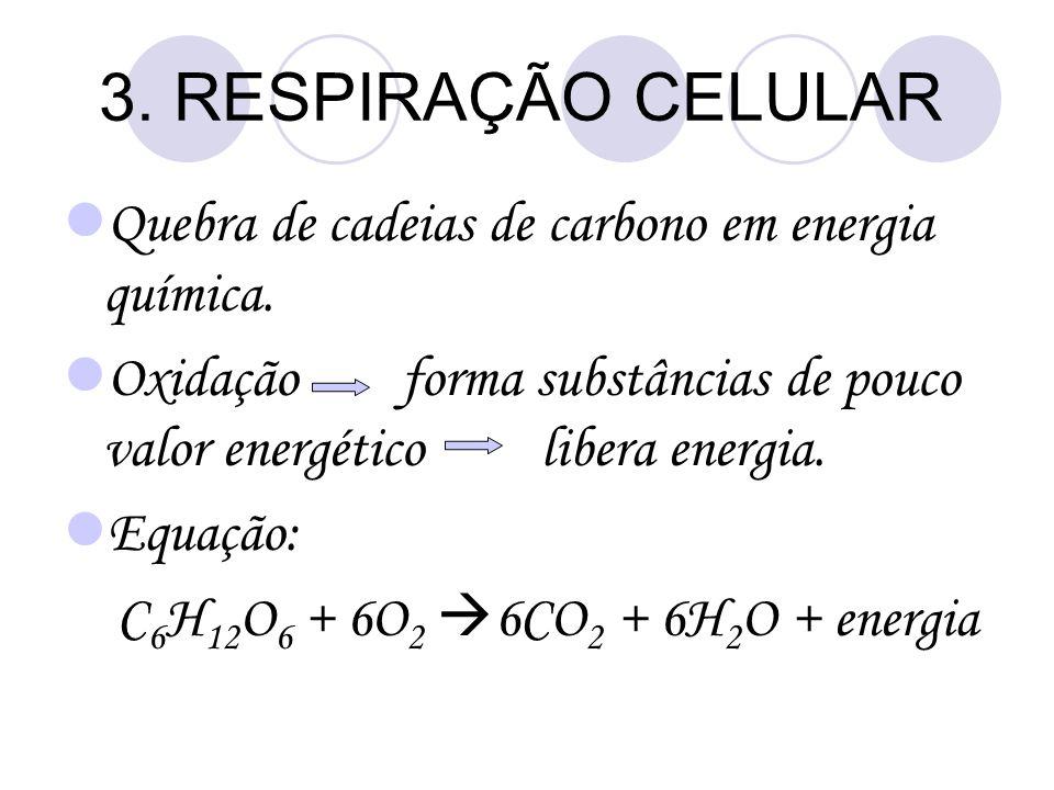 3. RESPIRAÇÃO CELULAR Quebra de cadeias de carbono em energia química. Oxidação forma substâncias de pouco valor energético libera energia. Equação: C