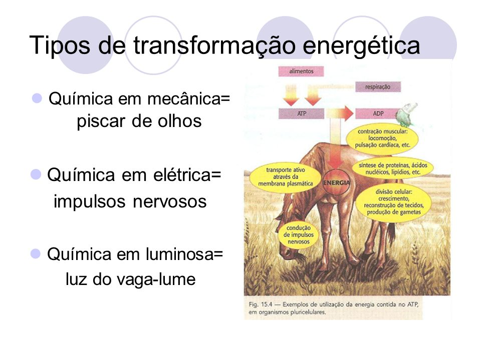 Tipos de transformação energética Química em mecânica= piscar de olhos Química em elétrica= impulsos nervosos Química em luminosa= luz do vaga-lume
