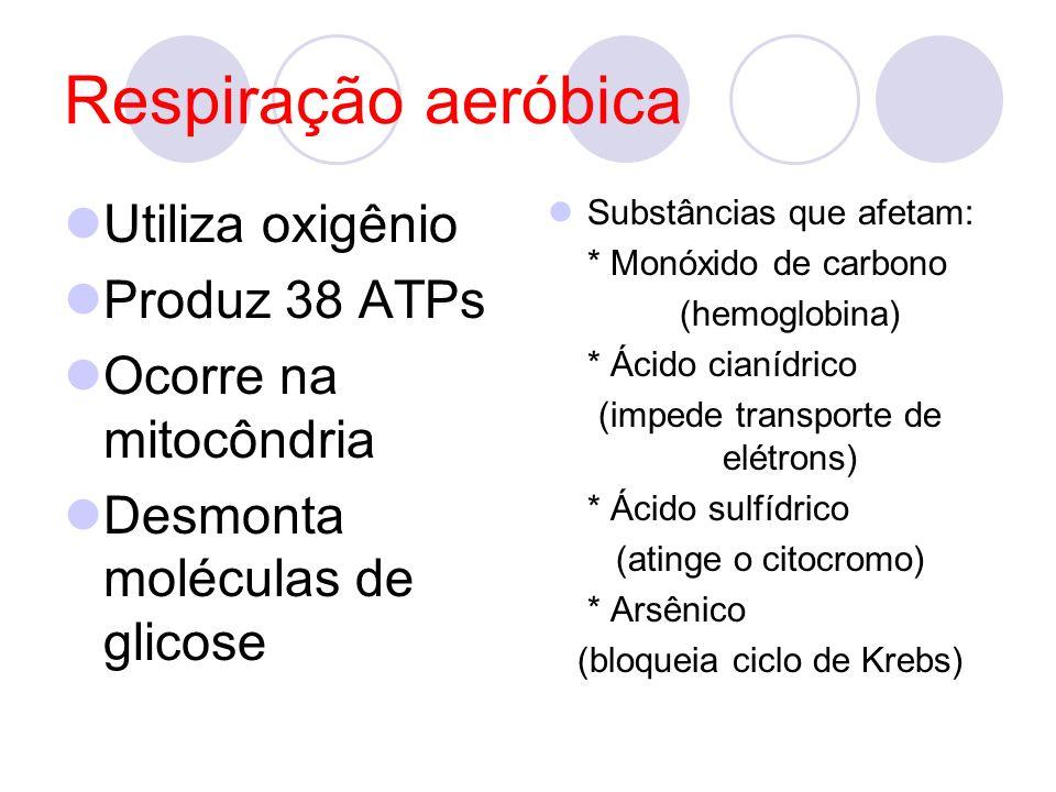 Respiração aeróbica Utiliza oxigênio Produz 38 ATPs Ocorre na mitocôndria Desmonta moléculas de glicose Substâncias que afetam: * Monóxido de carbono