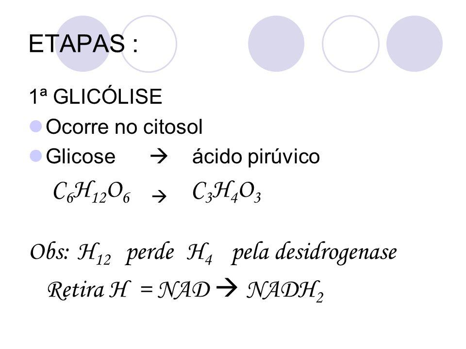 ETAPAS : 1ª GLICÓLISE Ocorre no citosol Glicose ácido pirúvico C 6 H 12 O 6 C 3 H 4 O 3 Obs: H 12 perde H 4 pela desidrogenase Retira H = NAD NADH 2