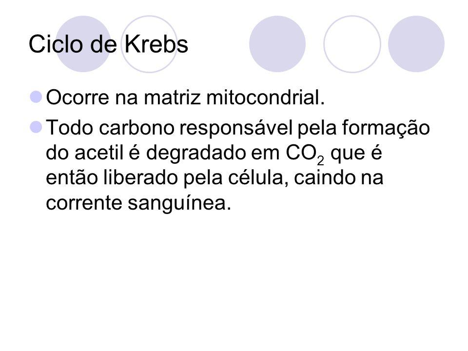 Ciclo de Krebs Ocorre na matriz mitocondrial. Todo carbono responsável pela formação do acetil é degradado em CO 2 que é então liberado pela célula, c