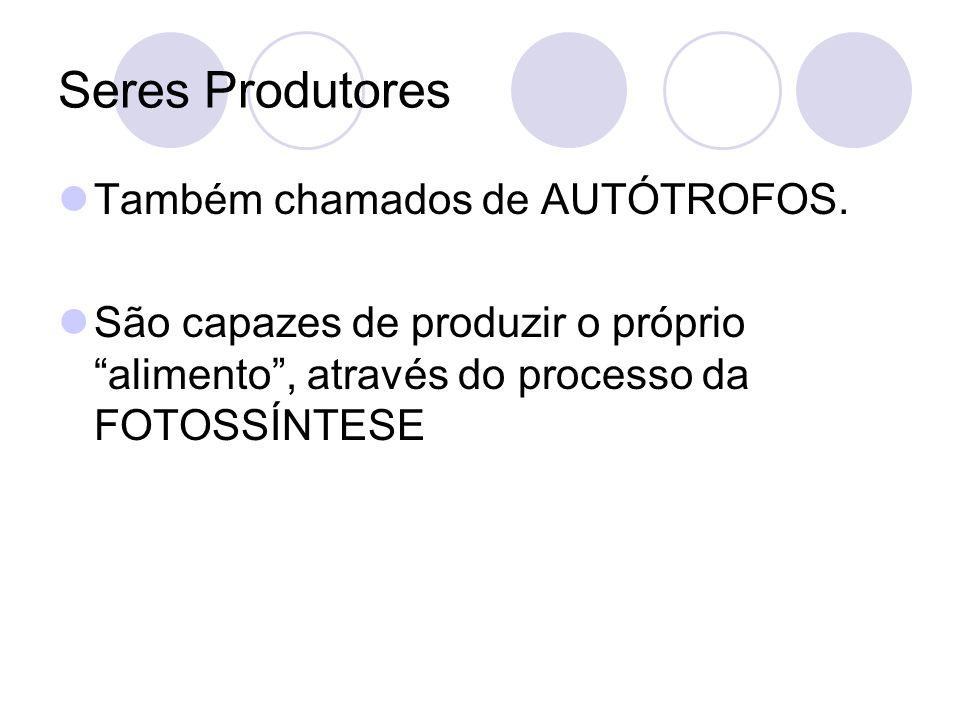 Seres Produtores Também chamados de AUTÓTROFOS. São capazes de produzir o próprio alimento, através do processo da FOTOSSÍNTESE