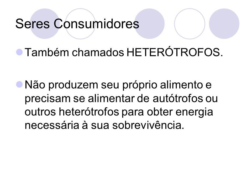 Seres Consumidores Também chamados HETERÓTROFOS. Não produzem seu próprio alimento e precisam se alimentar de autótrofos ou outros heterótrofos para o