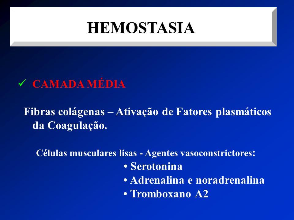 HEMOSTASIA CAMADA MÉDIA Fibras colágenas – Ativação de Fatores plasmáticos da Coagulação. Células musculares lisas - Agentes vasoconstrictores : Serot