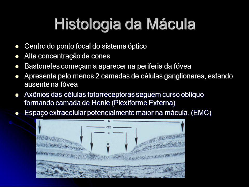 Histologia da Mácula Centro do ponto focal do sistema óptico Alta concentração de cones Bastonetes começam a aparecer na periferia da fóvea Apresenta