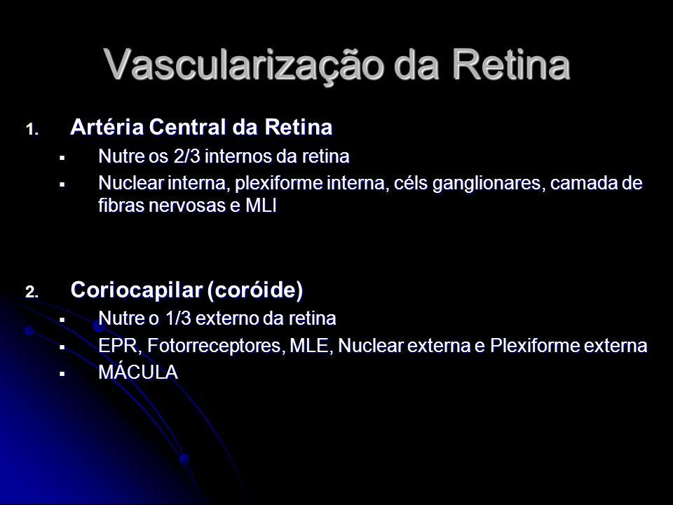 Vascularização da Retina 1. Artéria Central da Retina Nutre os 2/3 internos da retina Nutre os 2/3 internos da retina Nuclear interna, plexiforme inte