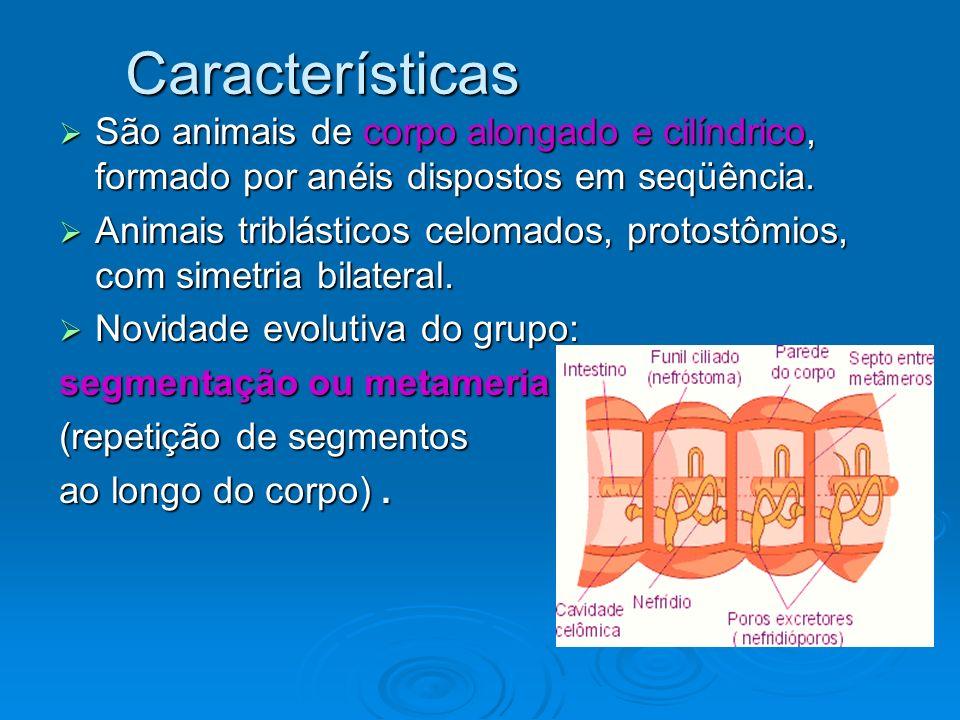 Corpo: Revestimento externo – cutícula fina e transparente, secretada pela epiderme.