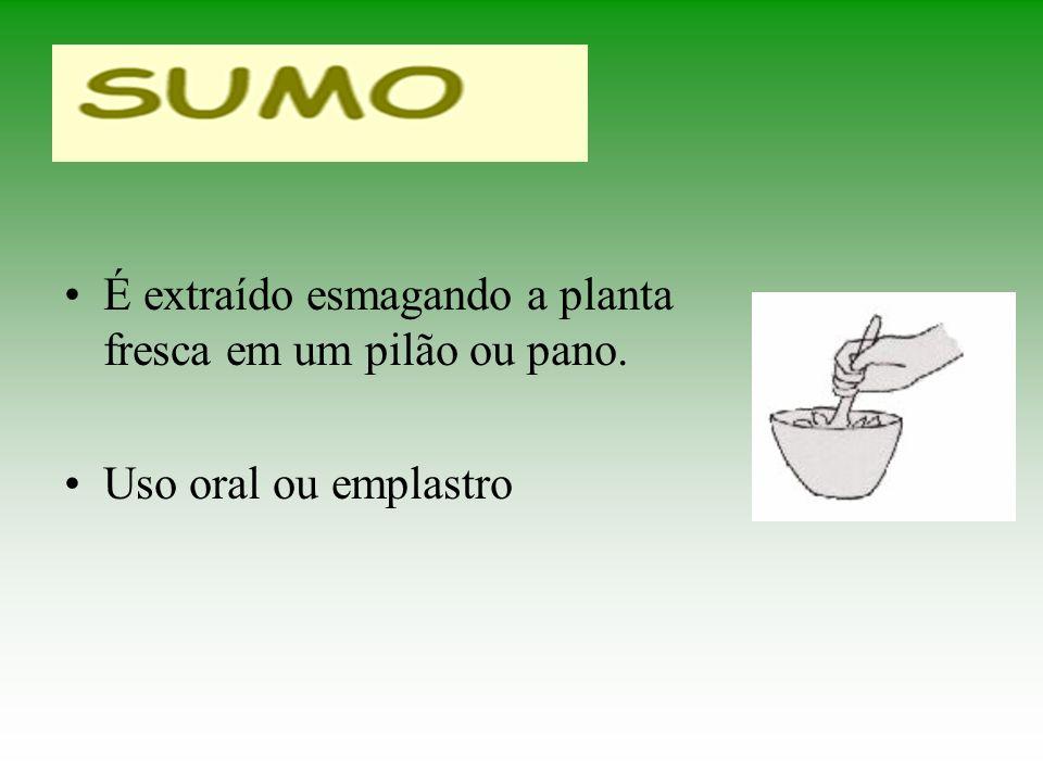 É extraído esmagando a planta fresca em um pilão ou pano. Uso oral ou emplastro