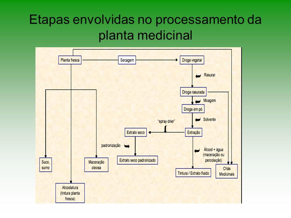 Trituração – consiste na ação mecânica de ¨arrebentar¨ as paredes das células do vegetal, tornando os p.a.
