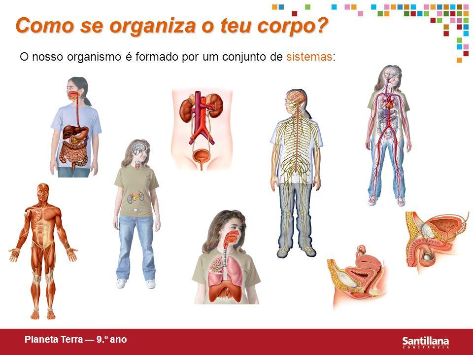 Sistema Como se organiza o teu corpo.Sistema Conjunto de órgãos interligados.