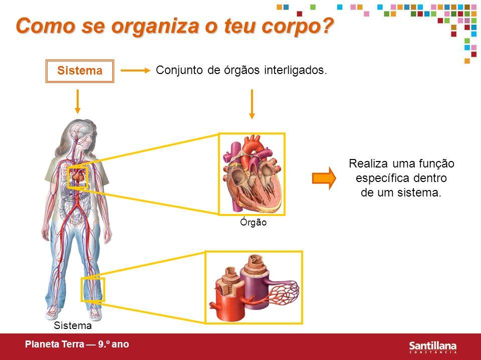 Como se organiza o teu corpo.Órgão Constituído por um ou mais tecidos.
