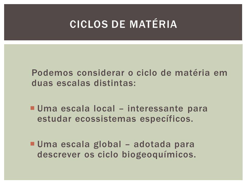 Podemos considerar o ciclo de matéria em duas escalas distintas: Uma escala local – interessante para estudar ecossistemas específicos. Uma escala glo