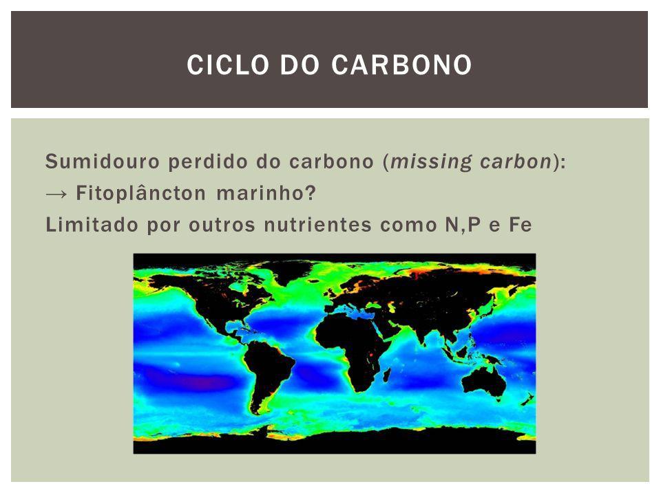 Sumidouro perdido do carbono (missing carbon): Fitoplâncton marinho? Limitado por outros nutrientes como N,P e Fe CICLO DO CARBONO