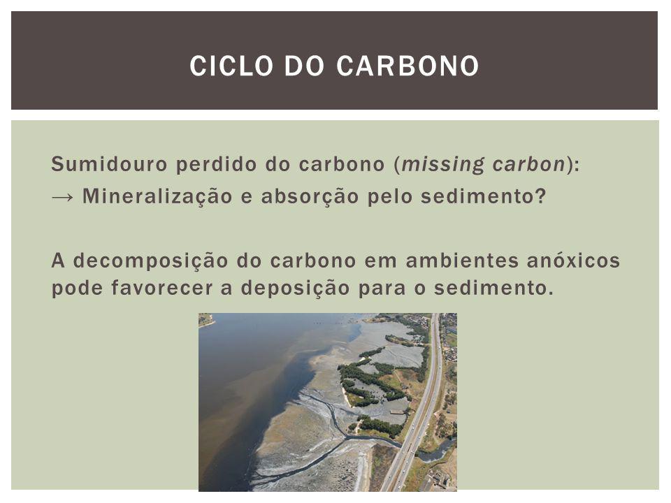 Sumidouro perdido do carbono (missing carbon): Mineralização e absorção pelo sedimento? A decomposição do carbono em ambientes anóxicos pode favorecer