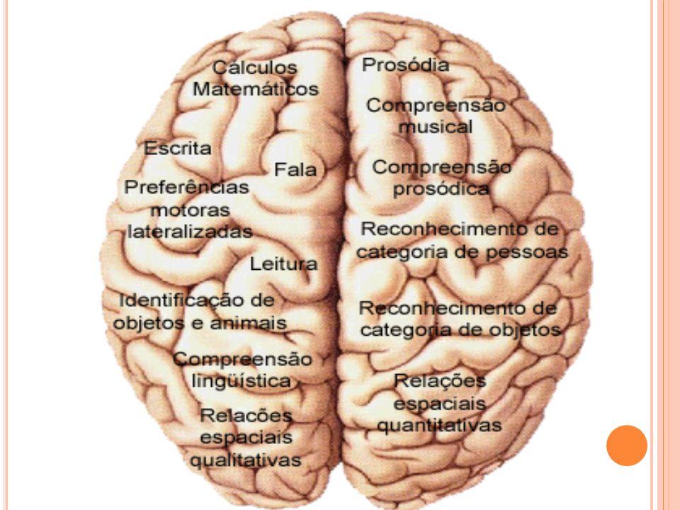 Muitos modelos de organização funcional foram postulados pelos estudiosos da cognição e, conseqüentemente, existem hoje muitas linhas do funcionalismo.